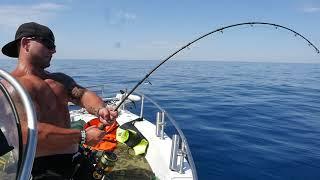 Zdolávačka tuňák