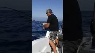 Tuňák - zdolávačka za jízdy